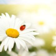 Верните своей жизни былую простоту и легкость